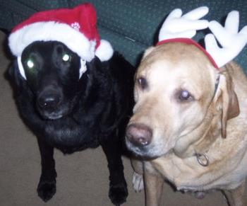 My boys, last Christmas - I took this picture 2005 to send to my son (their big brother) who was spending his Christmas in the Navy.  He did the same thing on Christmas 2006, but this time we got to talk to each other a lot.