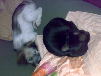 my dog and cat - my dog sleeping together with my cat.