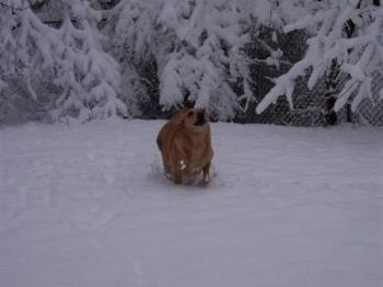 April 2005 - Robbie playing in the last 'fun' snowfall that we had