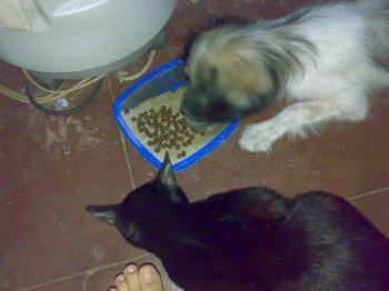 my dog and cat eating on the same tray - a photo of lalurp (dog) and lucky (cat) eating on the same tray.