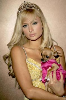From these two I prefer the dog - From these two I prefer the dog and it isn't even a cute dog
