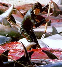 Slaughtering - Drunk, they are slaughtering dolphins, check out the picture and rate it as you like it. Thank you :)