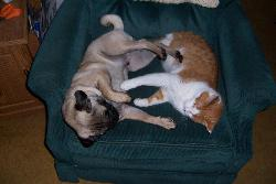 Saki and Tiger - playing on the chair