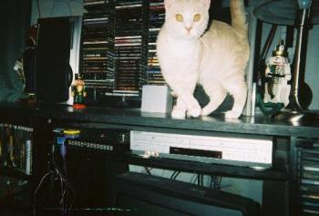 On top of the entertainment center - cat