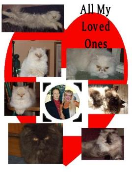 Me My Husband & Cats - Picture of my loved ones.