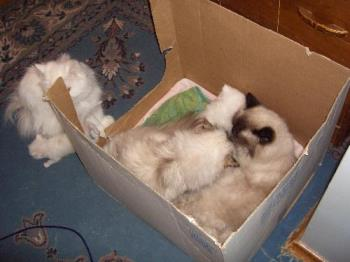 My cats - A box full of cats
