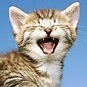 cat - I prefer cat