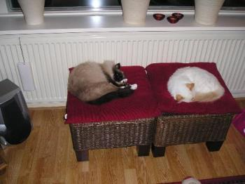 sleeping cats - my two lovely cats