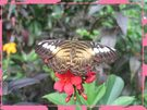 butterfly on a flower - my favorite picture from your gallery