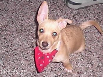 my dog - my dog jasper.