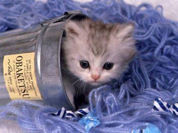 cat - cat photo...