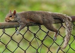 squirrel - squirrel