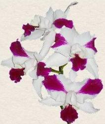 orchid - Here is another one