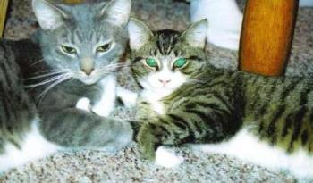 Moses & Leo - My beautiful cats Moses and Leo.