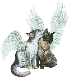 angel cats  - angel cats with wings