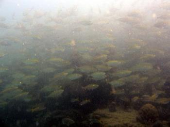diving - lots of fishes!!