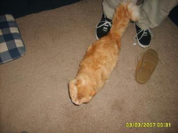 Mao - big, fat, fuzzy Mao. LOL we love this cat.