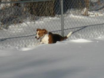 My Bussy - Buster loves the snow!