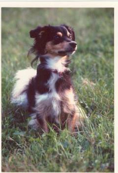my dog cincin - MY DOG CINCIN photo..