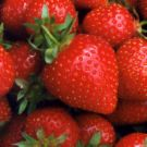 strawberry - strawberry image