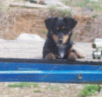 O-Tok-Tay - My dog, O-Tok-Tay