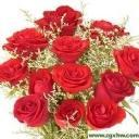 Flowers for you----my favorite flower  - rose