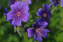 purple flower - Yes I love the color of this flower.
