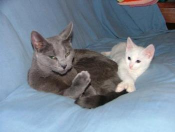 cats,kitten - My 2 Baby girls