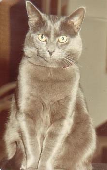 Smokey My cat - Smokey my cat that I had for 17 years....