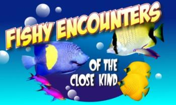 fish - fishy encounter