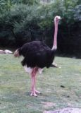 Ostrich - Come on, who wants to get chased by this thing! lol