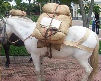Horse - Burdened horse.