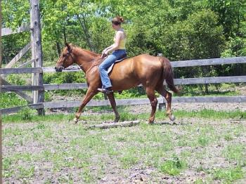 english  - sheilana with english saddle