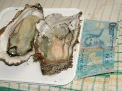 Oysters - A large size oyster