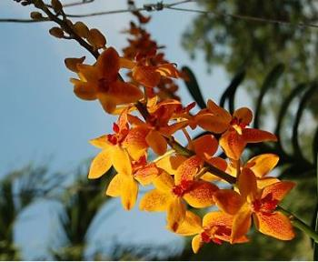 Orchids - Beautiful orchids.