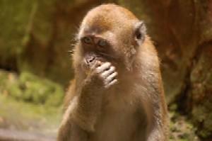 Ape - An ape or monkey.