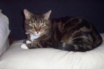Moomin - This is my furry feline alarm clock