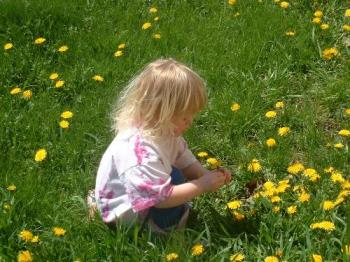 My daughter picking dandelions - We walked up to the post office to find a very lovely field of dandelions. Here's my youngest picking them to her hearts content!