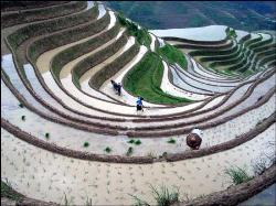 BOC - Best of CHINA, Plant Rice on Scenic Terraces - BOC - Best of CHINA, Plant Rice on Scenic Terraces