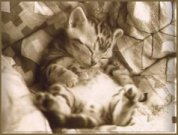 the sleeping kitty - I found this and thought it was cute so I am sharing