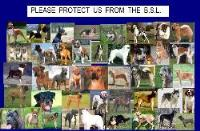 pleas protect these animals...