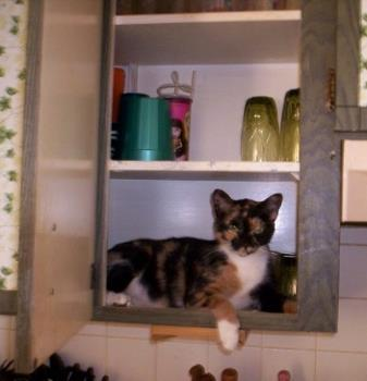 Patches - A picture of my cat Patches as she makes the cupboard her home