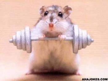 Hamster - Hamster on Steriods
