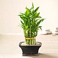 Bamboo - Bamboo
