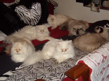 My cats - a bed full of cats
