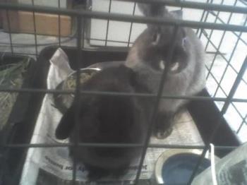 Pepper and Sasha - Pepper grey and Sasha black little girl