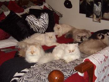 Our cats - Cats on my bed
