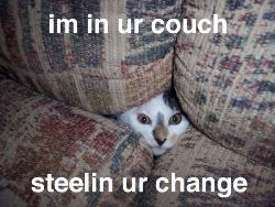 Im in your couch, Stealing your change!! - cat in the couch
