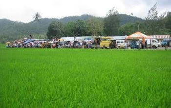 Ricefield - A rural community.