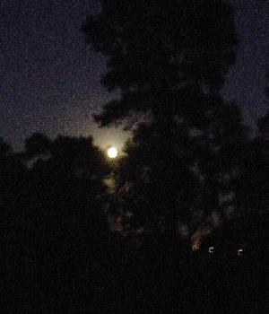 Picture of last night's moon - This is a picture of the full moon in the early hours of 1st June 2007 - the first day of Winter in Australia.